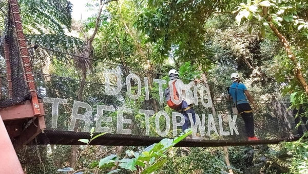 Doi Tung Treetop Walk